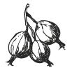 9-Stachelbeere